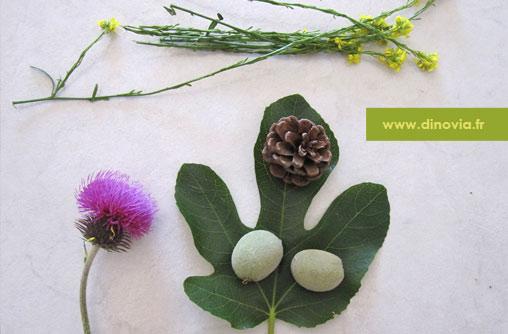 dinovia-vaisselle-jetable-et-biodégradable