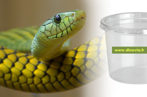 pot incubation oeuf reptile